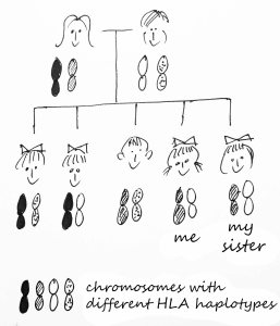 That's a 25% chance that a sister or brother has inherited the same HLA haplotypes from parents as yourself.